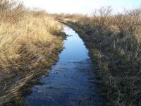 Bild 2 von Wanderwege zurzeit wegen Wasser nicht passierbar