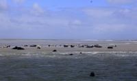 Bild 0 von Seehundbänke sind immer ein beliebtes Ausflugsziel