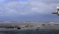 Bild 4 von Seehundbänke sind immer ein beliebtes Ausflugsziel