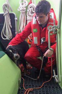 Bild 0 von Seenotretter bewahrten Hund vor sicherem Tod