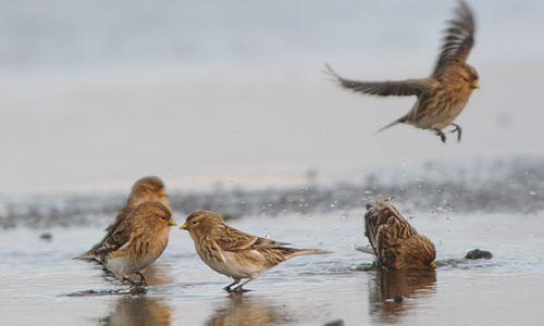 """Bild 0 von """"Kalenderbirds"""": Fotowettbewerb zu den 10. Zugvogeltagen"""