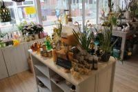 Bild 5 von Ehemalige Bäckerei Habbinga wurde jetzt zum Blumenmeer