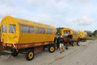 Bild 1 von Rat stellte Weichen für Zukunft der Pferdetaxis zum Flugplatz