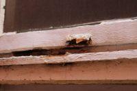Bild 5 von Ehemalige Isolierstation kann nur noch abgerissen werden
