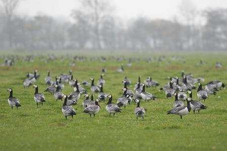 Bild 0 von Atlas über die Brutvögel in Niedersachsen erscheint in Kürze