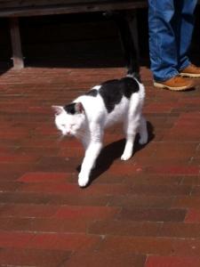 Bild 0 von Anhängliche und schmusige Katze sucht liebevolles Zuhause