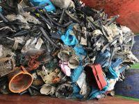 Bild 3 von Erneute Anlandungen von Strandgut auf  Borkum