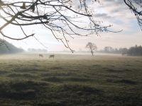 Bild 0 von Corona: Vierter Todesfall im Landkreis Aurich