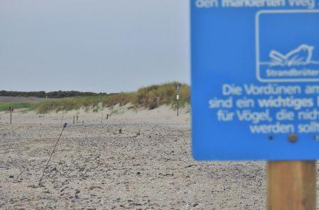 Bild 0 von Kinderstuben im Wattenmeer brauchen Rücksichtnahme